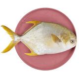 翔泰 冷冻无公害金鲳鱼 800g/袋 BAP认证 海鲜水产 *4件 167元(合41.75元/件)