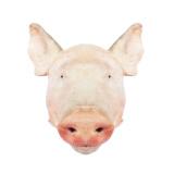 精气神 长白山山黑猪 猪头 4.3kg/袋(1个) 99元,可优惠至39.6元