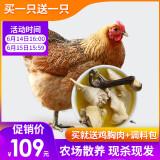 京东商城农谣 散养土鸡 净重2斤*2件+赠同款2件+赠炖汤辅料 193元包邮(合24.13元/斤)