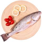 京东商城仙泉湖 美国红鱼/斑点尾鲈 海鲈鱼 500g*10条 139.2元包邮(299-159.8)