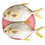 翔泰 冷冻无公害金鲳鱼 500g 2条袋装 BAP认证 海鲜水产 *7件 109.3元(合15.61元/件)