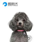 宠物活体:DOGTIMES 狗时代 灰泰迪犬幼犬 4800元