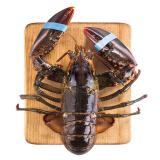 限地区:wecook 味库 鲜活波士顿龙虾 450-550g 1只 *2件 180元包邮(双重优惠)