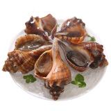 鲜活海螺 500g 1份 海鲜水产 烧烤食材 30.93元